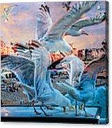 Seagulls On Brighton Pier Acrylic Print