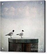 Seagulls Acrylic Print by Priska Wettstein