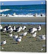 Seagulls Waiting  Acrylic Print