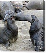 Seal Spa. Men's Talk2 Acrylic Print