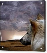 Searching For Home Acrylic Print