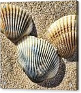 Seashells V2 Acrylic Print