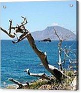 Seaside Tree Acrylic Print