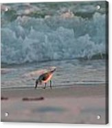Seaside Trio Acrylic Print by Charles Warren