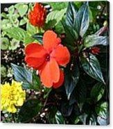 Seasonal Bouquet Acrylic Print