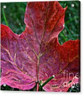 Seasonal Changes Acrylic Print