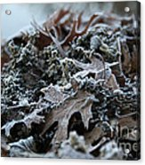 Seaweed And Oak Leaves Acrylic Print