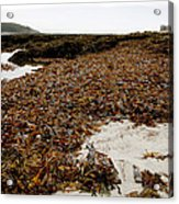 Seaweed Covered Beach Acrylic Print