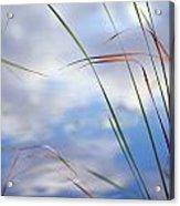Sedges And Sky Acrylic Print