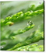 See The World In The Morning Dew  Acrylic Print