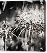 Seedy Neighborhood In Bw Acrylic Print