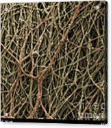 Sem Of Mycelium On Mushrooms Acrylic Print