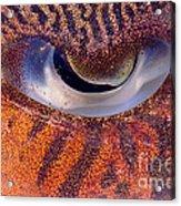 Sepia Cuttlefish Acrylic Print