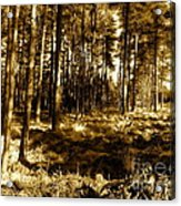 Sepia Forest Acrylic Print by Jessica Hubner