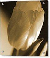 Sepia Tulip Acrylic Print