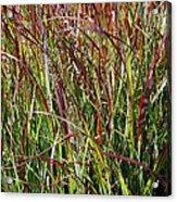 September Grasses By Jrr Acrylic Print