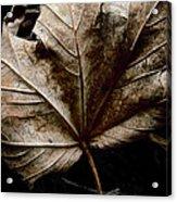 September Acrylic Print by Odd Jeppesen