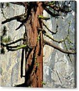 Sequoia And El Capitan Acrylic Print