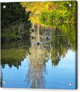 Serene Reflection Acrylic Print