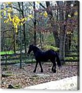 Serene Setting With A Friesian Acrylic Print
