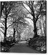 Serene Winding Country Road Acrylic Print