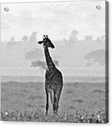 Serengeti Morning Acrylic Print