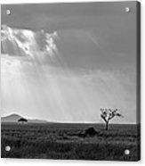 Serengeti Sunlight  Acrylic Print