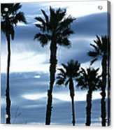 Seven Palms Acrylic Print by Gilbert Artiaga
