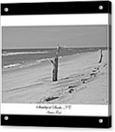 Shackleford Banks Ancient Forest  Acrylic Print