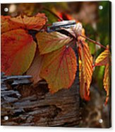 Shade In Fall Acrylic Print