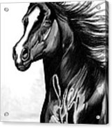 Shading Of A Horse In Bic Pen Acrylic Print