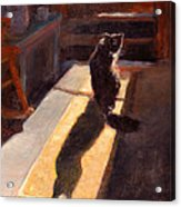 Shadow Cat Acrylic Print by Rita Bentley