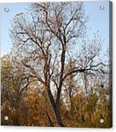 Shadow Cliff Tree Acrylic Print