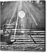 Shadow Acrylic Print by Darrin Doss