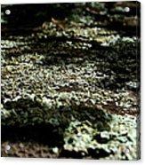 Shady Moss Acrylic Print