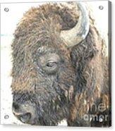 Shag Acrylic Print