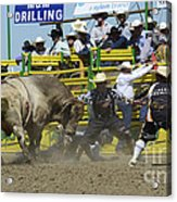 Rodeo Shaking It Up Acrylic Print