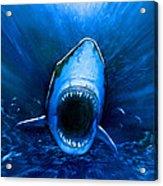 Shark Attack Acrylic Print by Chris Butler