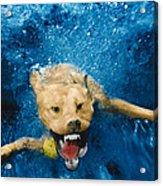 Shark Attack Acrylic Print