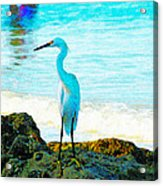 Sharon's Gift Acrylic Print