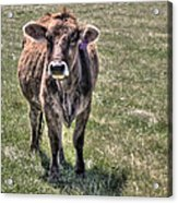She Is A Spokesperson For Her Tribe Acrylic Print