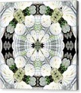 Shell Art 4 Acrylic Print