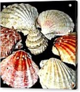 Shell Flower Acrylic Print