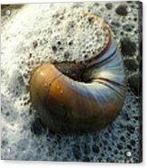 Shell In Sea Foam Acrylic Print