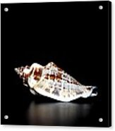 Shell On Leather 2 Acrylic Print