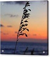 Sherbet Sky Acrylic Print