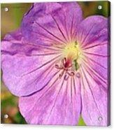 Shimmer Flower Acrylic Print