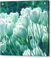 Shimmering Tulips Acrylic Print
