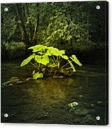 Shine On Me Acrylic Print by Svetlana Sewell