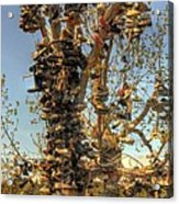 Shoe Tree Acrylic Print by Lori Kimbel